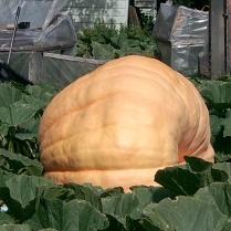 Brian K - Pumpkin