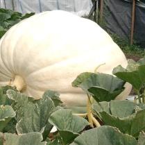 Brian K - 2009 Pumpkin
