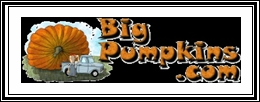 Big Pumpkin logo