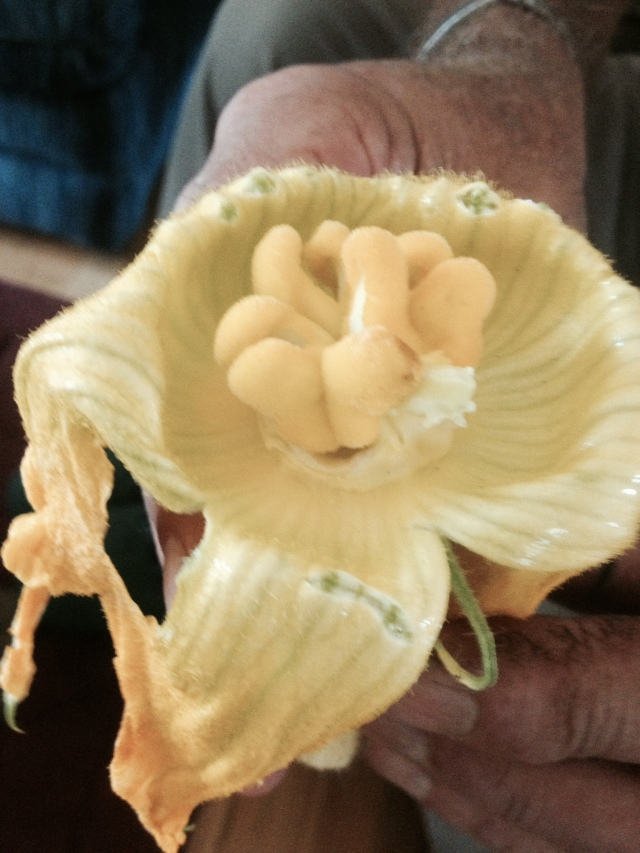 Pumpkin Flower with Seeds in the Lobe