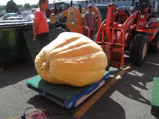 The winner! 820.5 lbs.